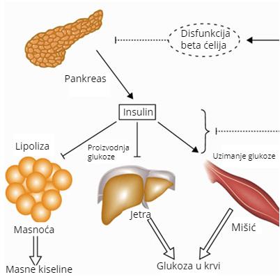 Uticaj hormona na telesnu težinu – Insulin