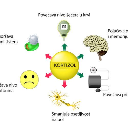Uticaj hormona na telesnu težinu – Kortizol