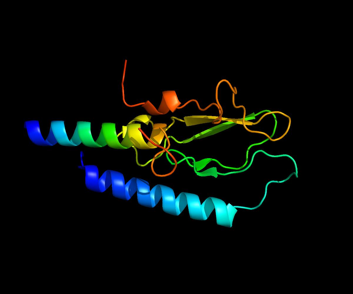 Uticaj hormona na telesnu težinu – Glukagon sličan peptid-1 (GLP-1)